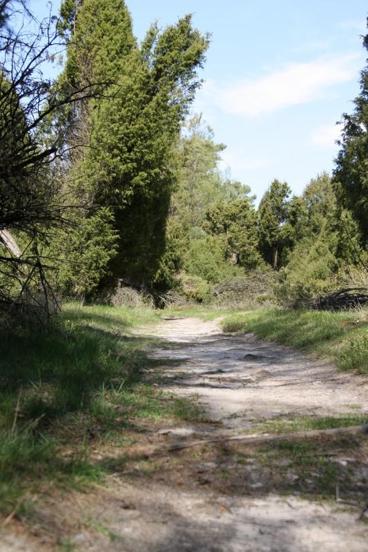 Weg zum Lösnsgrab: Tietlinger Wacholderhain