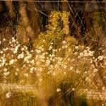 natur fotografie anna mastalerz