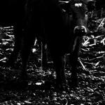 natur fotografie-natur photography