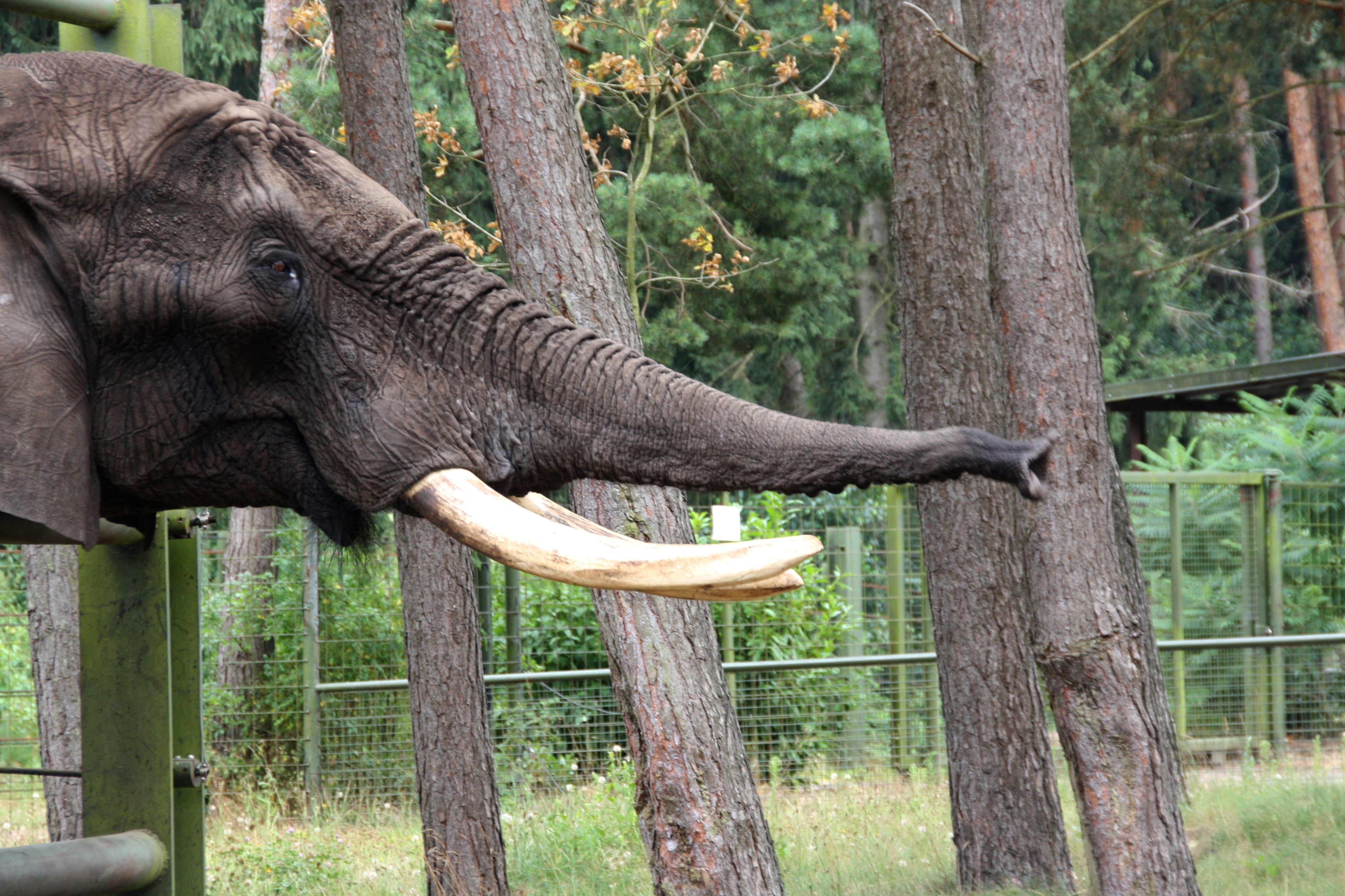 2017 serengeti park fotograf zum mitnehmen freizeitpark