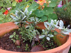 permaculture gardening: wie ein bio {organic} garten entsteht